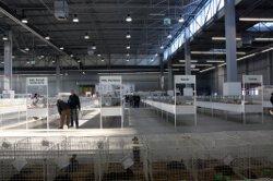 Okręgowa Wystawa Gołębi Pocztowych oraz Gołębi Rasowych, Drobiu Ozdobnego i Królików, Kielce 8-9 grudnia 2012